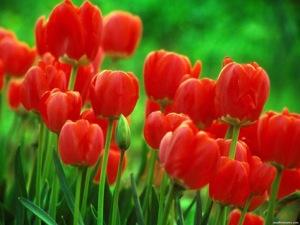 Flower-2-13505.jpeg