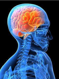cool-brain