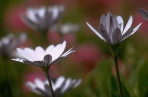 FLOWERS_0010